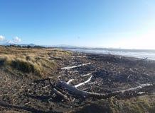 Taranaki, montagne de bois de flottage de côte du Nouvelle-Zélande Photographie stock libre de droits