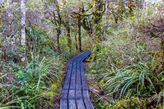 Taranakien faller banan - den Tongariro nationalparken royaltyfria foton
