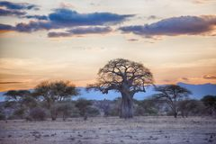 Africa tarangire. Tarangire include African lion, leopard, cheetah, caracal, honey badger, and African wild dog.It covers an area of approximately 2,850 square Stock Photography