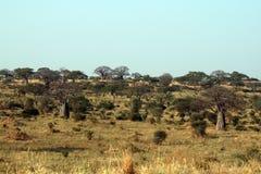 Tarangire landscape. The landscape of the tarangire national park in tanzania Royalty Free Stock Image