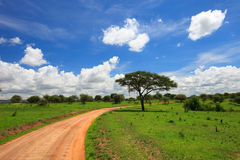 Tarangire national park Stock Photography
