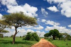 Tarangire national park Royalty Free Stock Image
