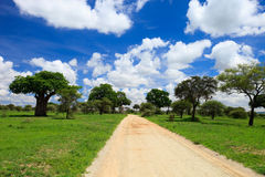 Tarangire national park. Beautiful landscape of Tarangire national park, Tanzania Stock Photo