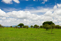 Tarangire national park. Beautiful landscape of Tarangire national park, Tanzania Stock Images