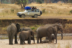 TARANGIRE NATIONAL PARK, CIRCA AUGUST 2010 - People photograph a royalty free stock image