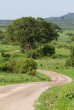 Tarangire road. A winding dirt road through the lush landscape of tarangire national park in summer Stock Image