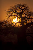 Tarangire Sunset 6549 Stock Photo