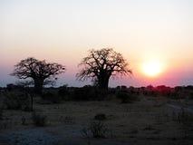 Tarangire sunset. A magic sunset in the tarangire national park in tanzania Stock Photography