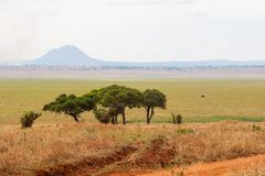 Tarangire Vista Stock Photo