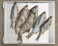 Taranka, ξηραμένα από τον ήλιο αλμυρά ψάρια ποταμών, κλασικό πρόχειρο φαγητό μπύρας Στοκ Εικόνες