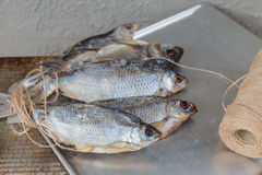 Taranka, ξηραμένα από τον ήλιο αλμυρά ψάρια ποταμών, κλασικό πρόχειρο φαγητό μπύρας Στοκ φωτογραφίες με δικαίωμα ελεύθερης χρήσης