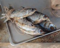 Taranka, ξηραμένα από τον ήλιο αλμυρά ψάρια ποταμών, κλασικό πρόχειρο φαγητό μπύρας Στοκ φωτογραφία με δικαίωμα ελεύθερης χρήσης