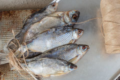 Taranka, ξηραμένα από τον ήλιο αλμυρά ψάρια ποταμών, κλασικό πρόχειρο φαγητό μπύρας Στοκ Εικόνα