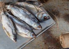 Taranka, Sun Dried Salty River Fish, Classic Beer Snack Stock Photo