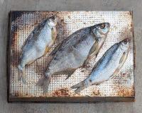 Taranka, Sun Dried Salty River Fish, Classic Beer Snack Stock Images