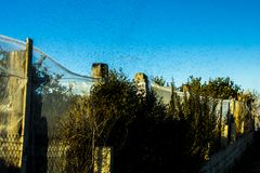 Рой tarantella или насекомые походя москит стоковые изображения rf