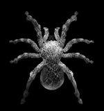 Tarantelspinne in der Spinnennetzform, die sie auf Schwarzem lokalisierte Stockfotos
