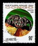 Tarantola (famiglia: Theraphosidae), serie degli insetti, circa 1994 Fotografie Stock
