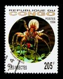 Tarantola (famiglia: Theraphosidae), serie degli insetti, circa 1994 Fotografia Stock Libera da Diritti
