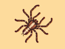 Tarantula αραχνών επίσης corel σύρετε το διάνυσμα απεικόνισης Στοκ εικόνα με δικαίωμα ελεύθερης χρήσης