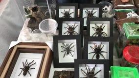 tarantula Stockfotos