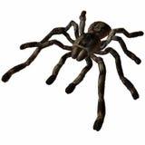 tarantula иллюстрация штока