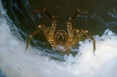 Tarantula Stock Images