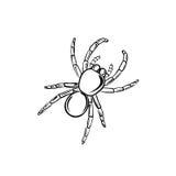 tarantula Photographie stock