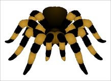 tarantula Imágenes de archivo libres de regalías