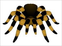 tarantula stock abbildung