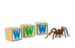 Tarantula avec des blocs de WWW photographie stock libre de droits