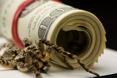 Tarantula and dollars roll Royalty Free Stock Photography