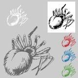 Tarantula Drawing Stock Photo