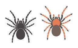 tarantula inseto ilustração do vetor