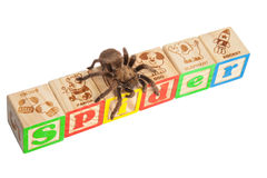 Tarantula literuje pająka na blokach Zdjęcia Royalty Free