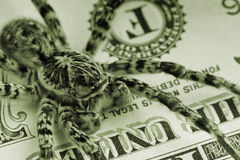 Tarantula and money - finance protection concept Stock Images