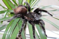 tarantula siedzi na pięknym tle obraz royalty free