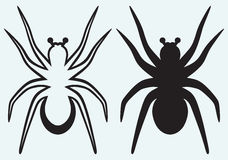 Tarantula spider Royalty Free Stock Photos