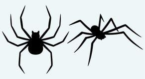 Tarantula spider Stock Image