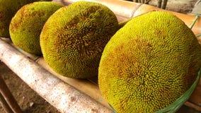 Tarap fruit Stock Image