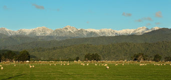 Tararua Rangers Stock Images