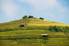 Tarasów ryż pola na górze w północnym zachodzie Wietnam Obrazy Stock