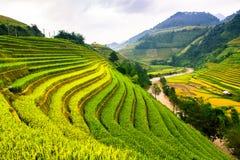 Tarasów ryż pola na górze w północnym zachodzie Wietnam Fotografia Stock