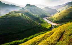 Tarasów ryż pola na górze w północnym zachodzie Wietnam Zdjęcie Stock