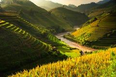 Tarasów ryż pola na górze w północnym zachodzie Wietnam Obraz Royalty Free