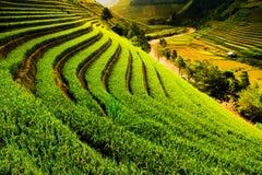 Tarasów ryż pola na górze w północnym zachodzie Wietnam Obrazy Royalty Free
