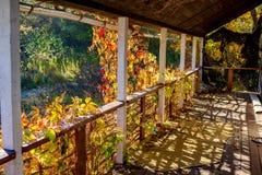 Taras porzucający dom przerastający z dziewczęcymi winogronami fotografia stock