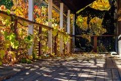 Taras porzucający dom przerastający z dziewczęcymi winogronami zdjęcie stock