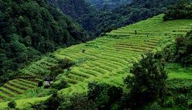 taras ryżu Obraz Stock