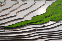 Tarasowaci ryż pola z wodą w Mu Cang Chai Obrazy Royalty Free